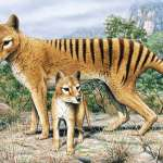 Tasmanian_Tiger_Thylacine_Adult_Cub_by_artist_Rod_Scott.jpg